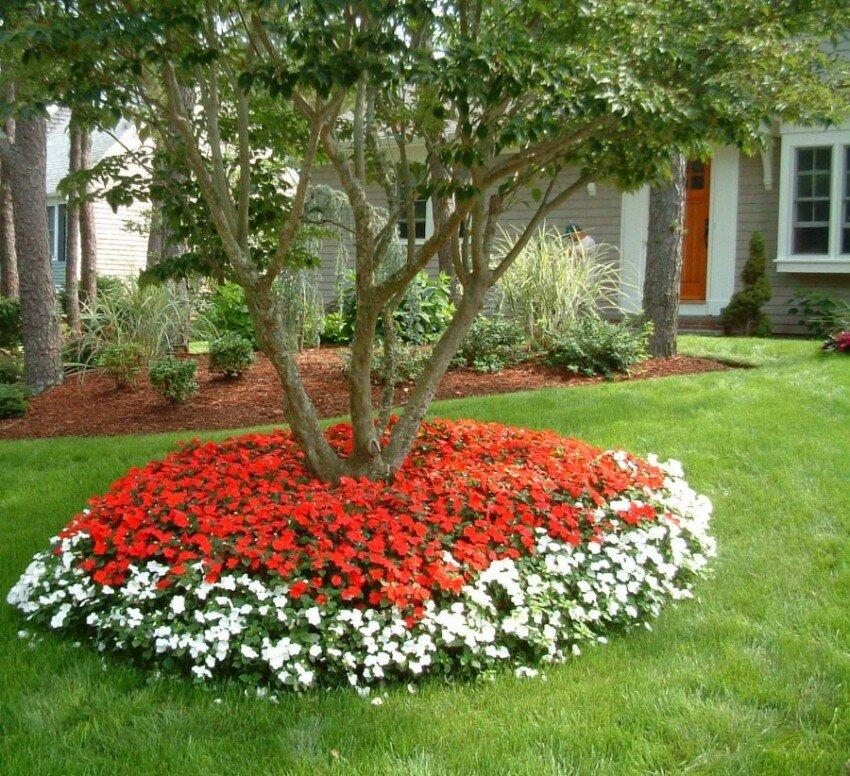 как красиво посадить цветы на клумбе фото моя
